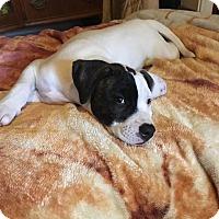 Adopt A Pet :: Ramona - Broken Arrow, OK