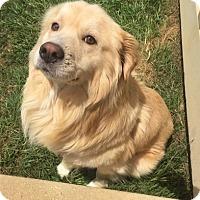 Adopt A Pet :: Doc and Dena - New Canaan, CT