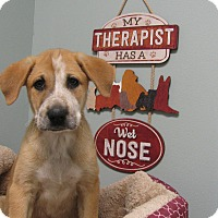Adopt A Pet :: Samuel - South Dennis, MA