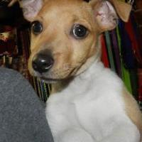 Adopt A Pet :: Nibbles - Merriam, KS