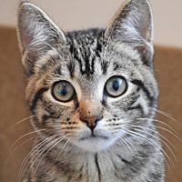 Adopt A Pet :: Bennington - Green Bay, WI
