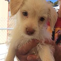 Adopt A Pet :: Amy - Monterey, CA