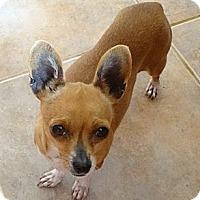 Adopt A Pet :: Rosita - Tucson, AZ