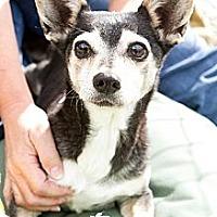 Adopt A Pet :: Maggie - Acton, CA
