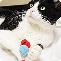Adopt A Pet :: Cosmo - Chicago, IL