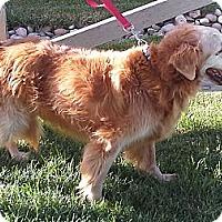 Adopt A Pet :: Mandy - Denver, CO