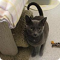 Adopt A Pet :: Tara - Newport Beach, CA