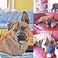 Adopt A Pet :: Charlie - Santa Monica, CA