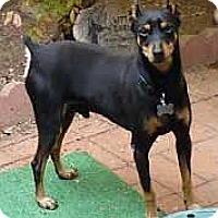 Adopt A Pet :: Maxamillion - Oceanside, CA