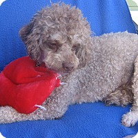 Adopt A Pet :: Cappy-WATCH MY VIDEO!!! - Irvine, CA
