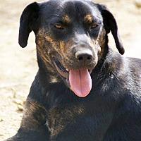 Adopt A Pet :: Susan - Hagerstown, MD