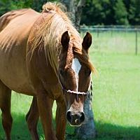 Adopt A Pet :: Niache - Hinesville, GA