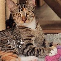 Adopt A Pet :: Destiny - Freeport, FL