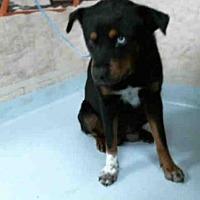 Adopt A Pet :: BAILEY - Pasadena, TX