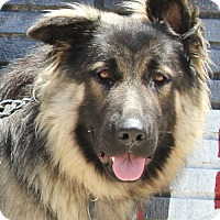 Adopt A Pet :: Levi von Snow - Los Angeles, CA