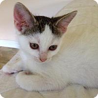 Adopt A Pet :: Peach - New York, NY