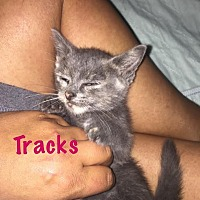Adopt A Pet :: Tracks - Island Park, NY
