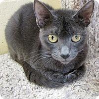 Adopt A Pet :: Felix - Chula Vista, CA