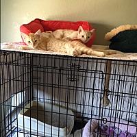 Adopt A Pet :: Tanner & Tink - El Dorado Hills, CA