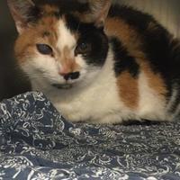 Adopt A Pet :: Annita - Belleville, ON