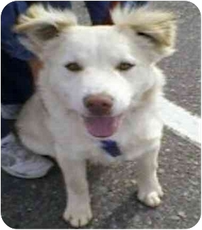 Retriever (Unknown Type) Mix Dog for adoption in Golden Valley, Arizona - Max