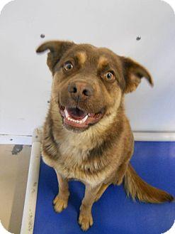 Husky Mix Dog for adoption in Morden, Manitoba - Indy