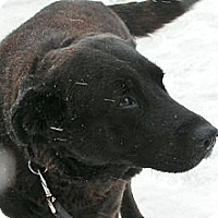 Adopt A Pet :: Shadow - Rigaud, QC