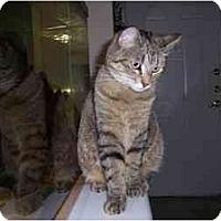 Adopt A Pet :: The Mrs. - Scottsdale, AZ