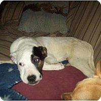 Adopt A Pet :: Crystal - Alliance, NE
