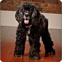 Adopt A Pet :: Sasha - Owensboro, KY