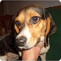 Adopt A Pet :: Macy - Eden, NC