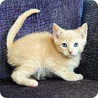 Adopt A Pet :: Dora - Ft. Lauderdale, FL