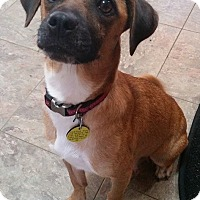 Adopt A Pet :: Cabby - North Olmsted, OH