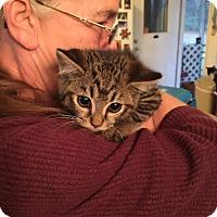 Adopt A Pet :: Sam-I-Am - McDonough, GA