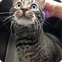 Adopt A Pet :: Beast - Newport Beach, CA