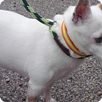 Adopt A Pet :: Sammy - Muskegon, MI