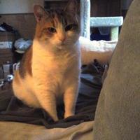 Adopt A Pet :: Nikki - Blackstock, ON