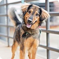 Adopt A Pet :: Razzle - Richmond, VA