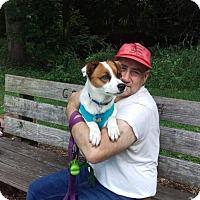Adopt A Pet :: Milo - Keyport, NJ