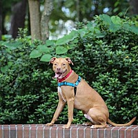 Adopt A Pet :: Ned - Gainesville, FL