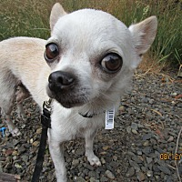 Adopt A Pet :: Gus - Tillamook, OR
