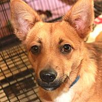 Adopt A Pet :: Hecky - Boca Raton, FL
