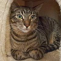Adopt A Pet :: Jasper - Seguin, TX
