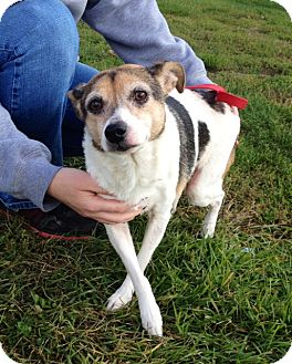 Terrier (Unknown Type, Small) Mix Dog for adoption in Indianola, Iowa - Ella