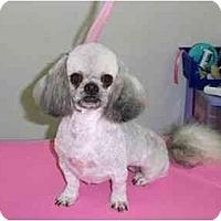 Adopt A Pet :: Precious & Biscuit - Dayton, OH