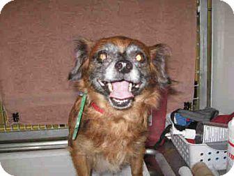 Chihuahua Dog for adoption in El Cajon, California - Moca
