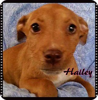 Terrier (Unknown Type, Medium) Mix Puppy for adoption in Ahoskie, North Carolina - Hailey