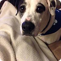Adopt A Pet :: Jamison - Chesterfield, VA