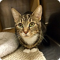 Adopt A Pet :: Evie - Colmar, PA