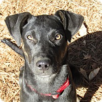 Adopt A Pet :: Happy Howie - Brattleboro, VT